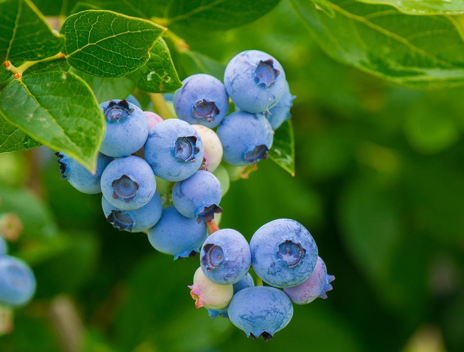 Berry Makanan Penambah Selera Makan Anak